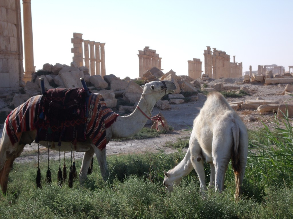 Camel and baby camel, Palmyra, 2010.