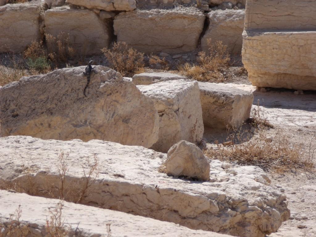 Lizard friend : ) Palmyra, 2010.