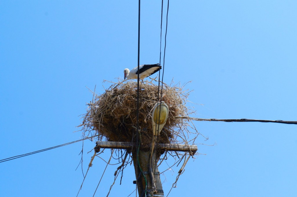 Stork friend in the village : )