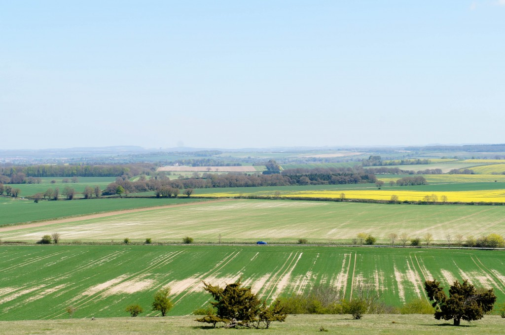 It is possible to see the chalk in the landscape around Danebury.